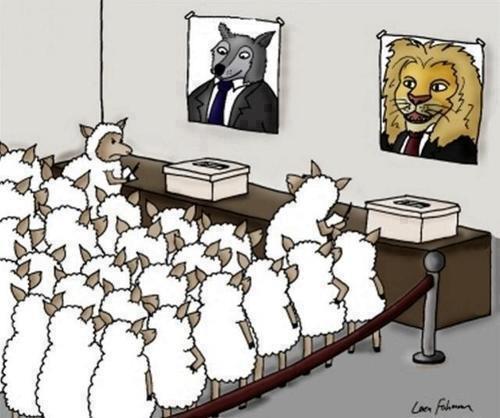Sheep comic